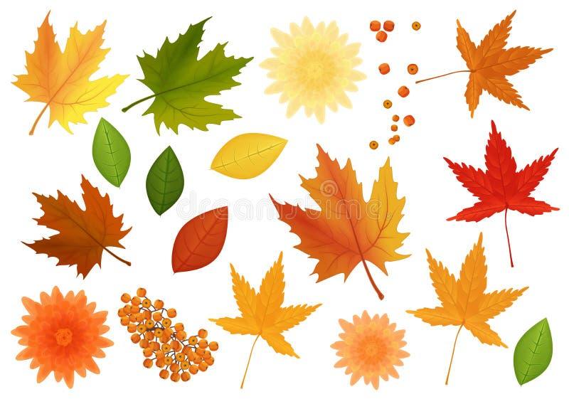 Grand ensemble de feuilles et de fleurs réalistes de vecteur du genre différent d'arbres d'isolement illustration de vecteur
