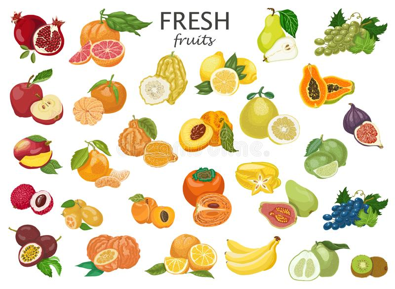 Grand ensemble de fruits colorés illustration stock