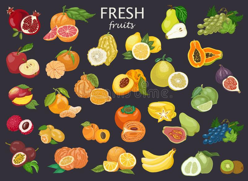 Grand ensemble de fruits colorés illustration de vecteur