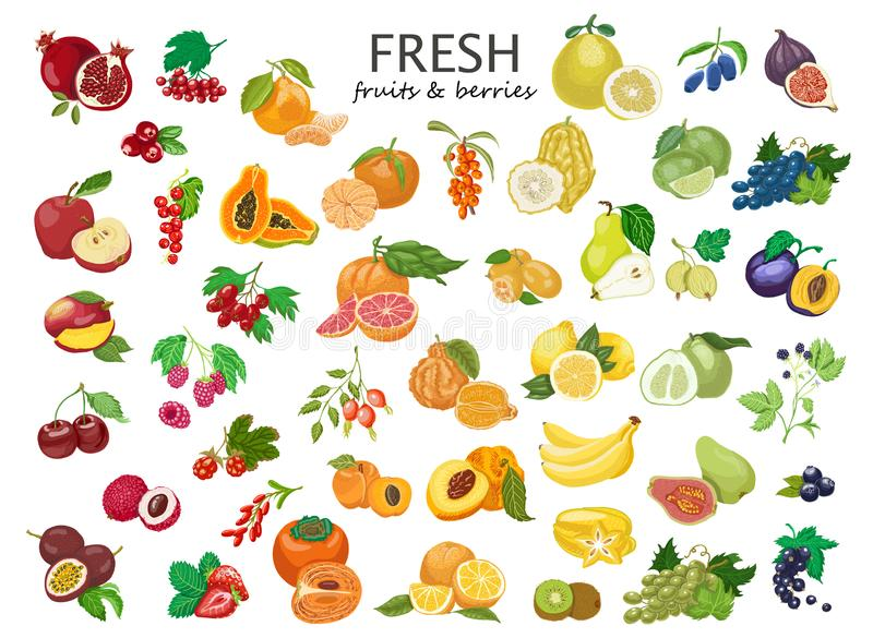 Grand ensemble de fruits et de baies colorés illustration de vecteur