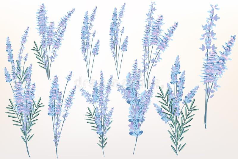 Grand ensemble de ressort de fleurs de lavande pour la conception illustration libre de droits