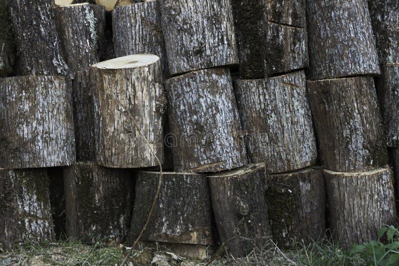Grand entrepôt des tronçons en bois image stock