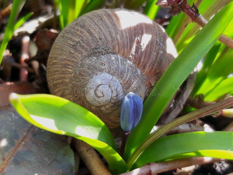 Grand escargot dans le jardin photographie stock libre de droits