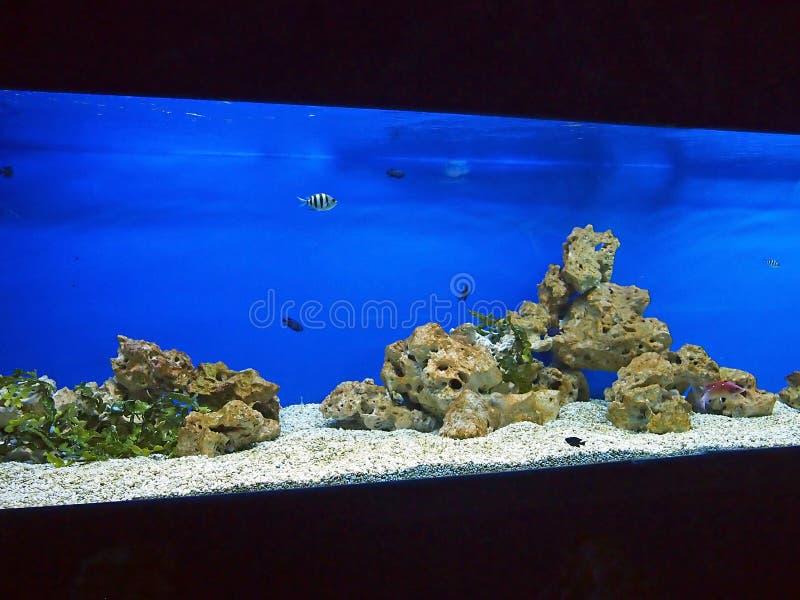 Grand et long aquarium avec le bleu d'eau de mer photo libre de droits
