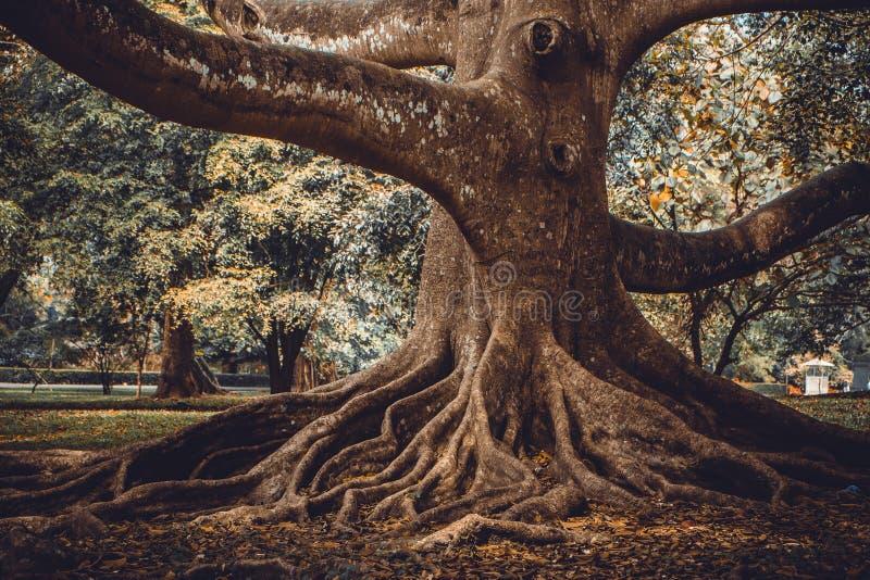 Grand fond d'arbre photographie stock libre de droits