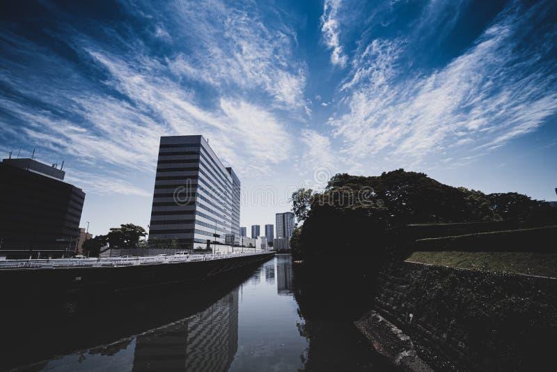 Grand fond d'arbre, gratte-ciel au centre de la ville image stock