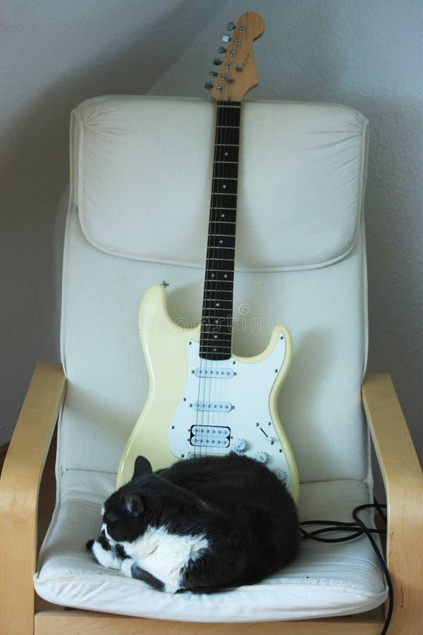 Grand, gros, se reposant chat se reposant sur la chaise avec une guitare à l'arrière-plan image libre de droits