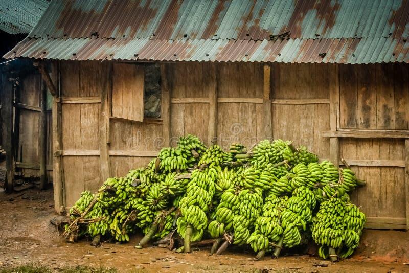 Grand groupe de bananes photos libres de droits