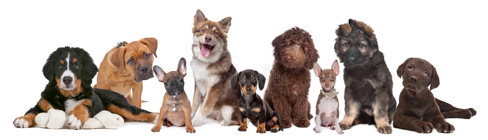 Grand groupe de chiots images stock