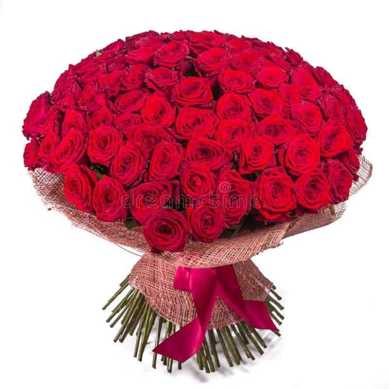 Grand groupe de roses rouges d'isolement sur le fond blanc image stock