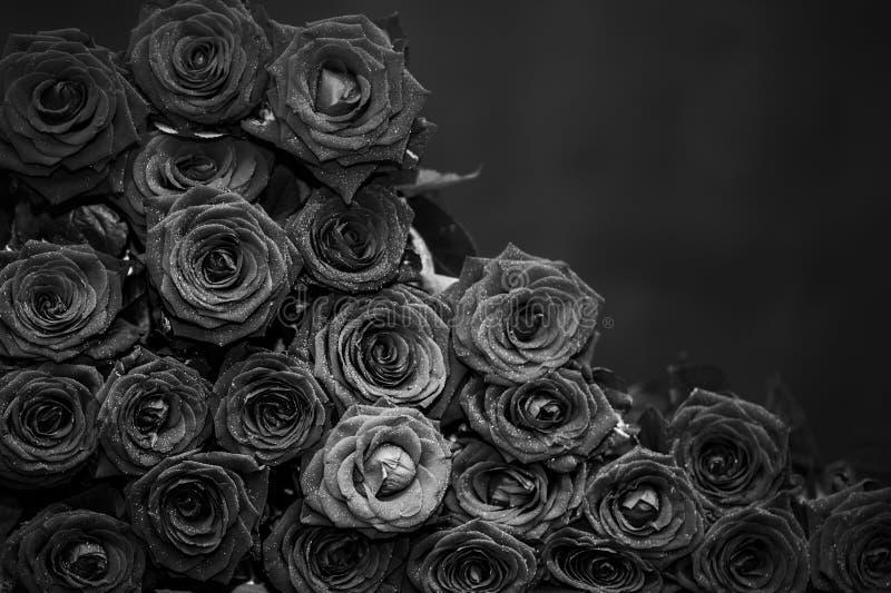 Grand groupe de roses rouges, photo noire et blanche photos libres de droits