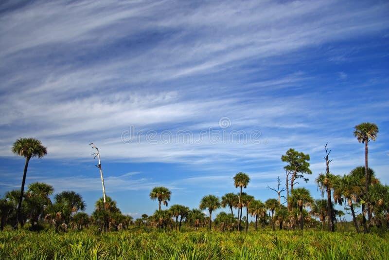 Grand horizontal de Cypress photos stock