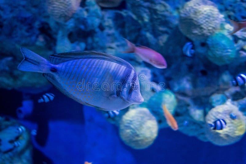 Grand Hurghada Aquarium - Red Sea in Glass royalty free stock photos