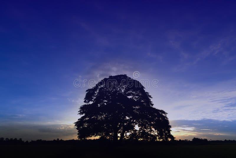 Grand isolat d'arbre en automne sur le champ, style abstrait de couleur photographie stock libre de droits