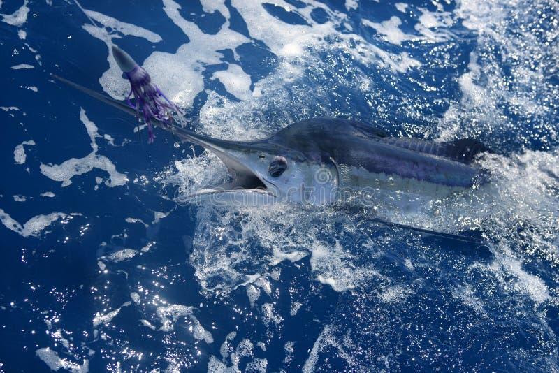 Grand jeu atlantique de marlin blanc sportfishing image libre de droits