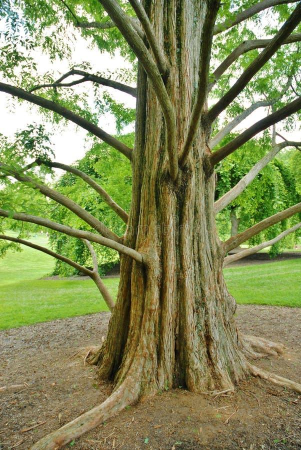 Grand joncteur réseau d'arbre, et longs branchements chez Brookeside GA image stock