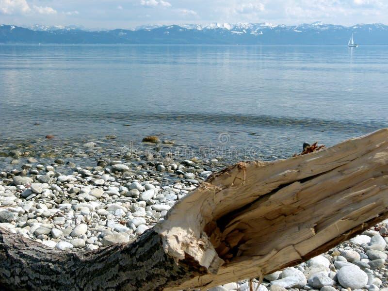 Grand lac avec des montagnes de neige à l'arrière-plan et à l'arbre bizarre comme premier plan photo stock