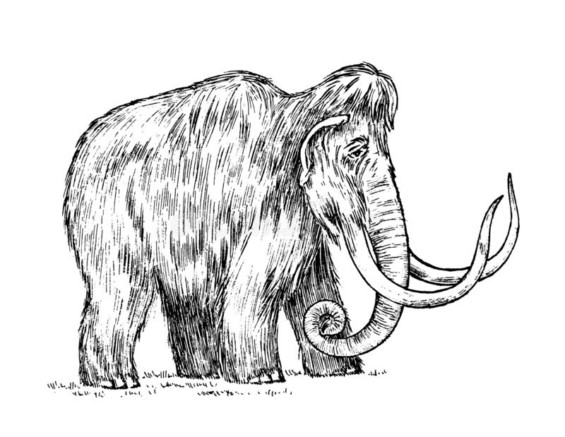 Grand mammouth Animal éteint Ancêtres des éléphants Type de cru Croquis tiré par la main gravé Illustration de vecteur illustration stock