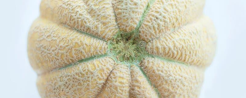 Grand melon jaune pâle sur le fond bleu photos stock