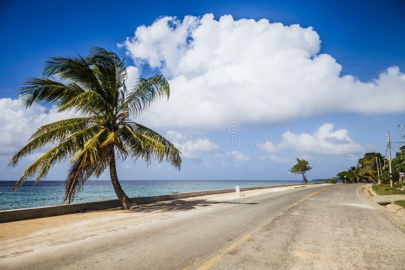 Grand palmier du côté de la route photo libre de droits