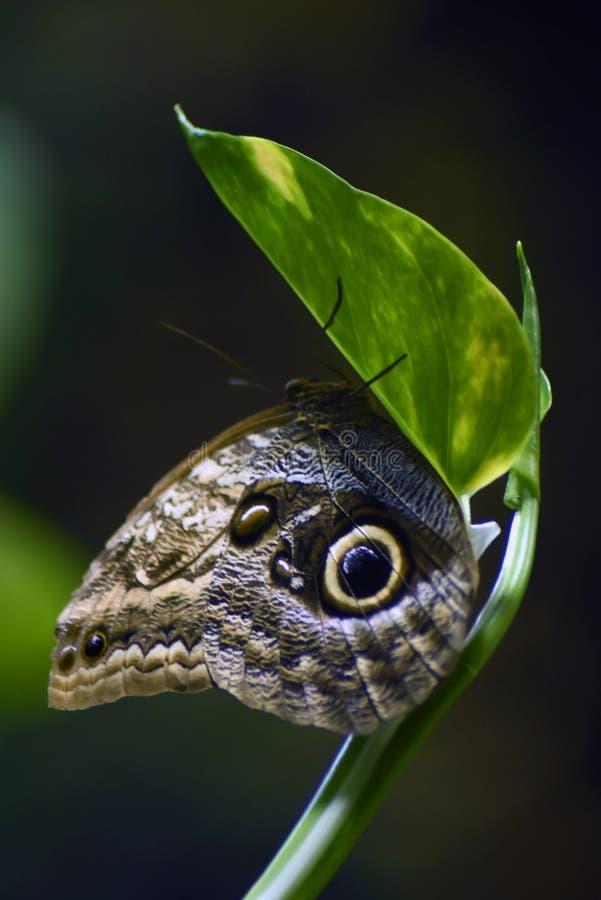 Grand papillon tropical sur un tronc d'arbre images libres de droits
