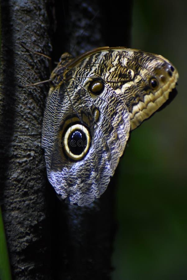 Grand papillon tropical sur un tronc d'arbre images stock