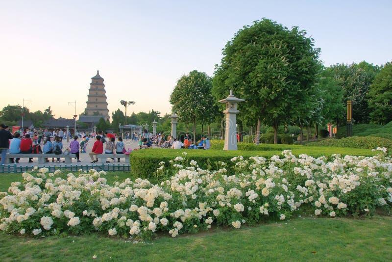 Grand parc sauvage de pagoda d'oie photo stock