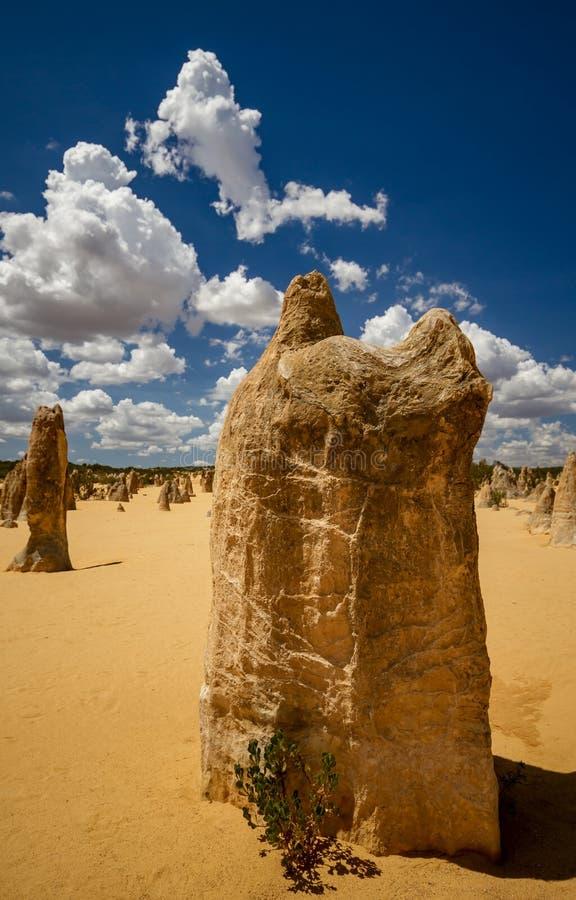 Grand pilier de chaux en parc national de Nambung images libres de droits