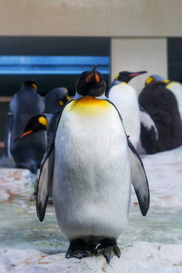 Grand pingouin d'étranger photographie stock