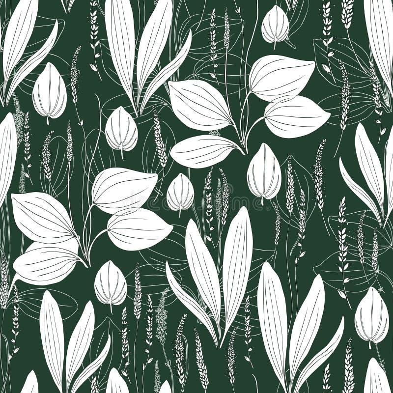 Grand plantain de modèle de fines herbes sans couture, fleur blanche sauvage principale de champ de plante médicinale de Plantago illustration stock