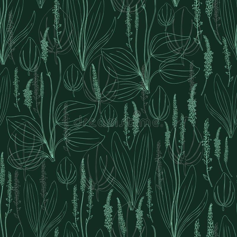 Grand plantain de modèle de fines herbes sans couture, fleur sauvage principale de champ de plante médicinale de Plantago d'isole illustration libre de droits