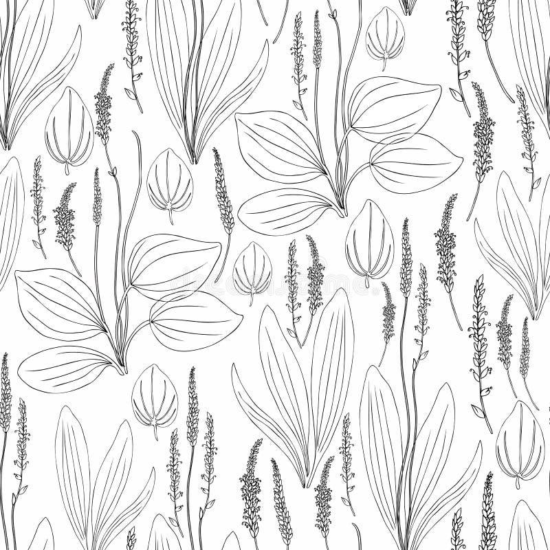Grand plantain de modèle de fines herbes sans couture, fleur sauvage principale de champ de plante médicinale de Plantago d'isole illustration stock