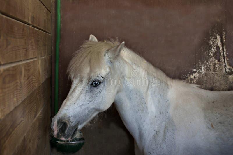 Grand poney photographie stock libre de droits