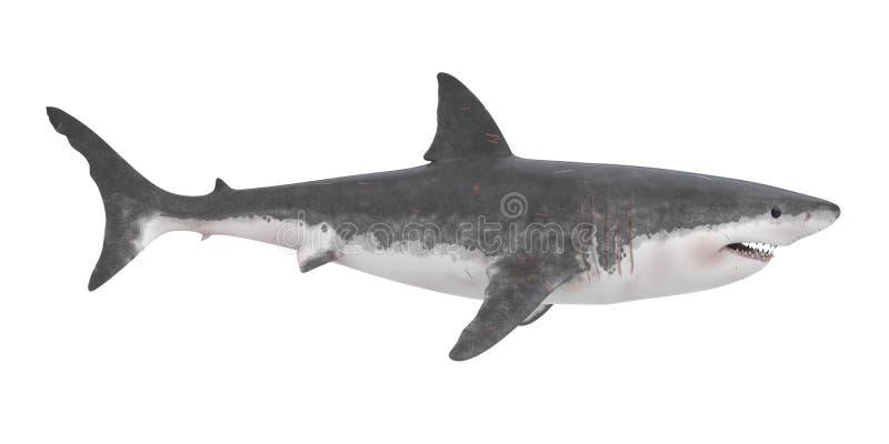 Grand requin blanc d'isolement illustration stock