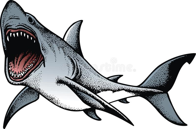 Grand requin d'isolement illustration stock