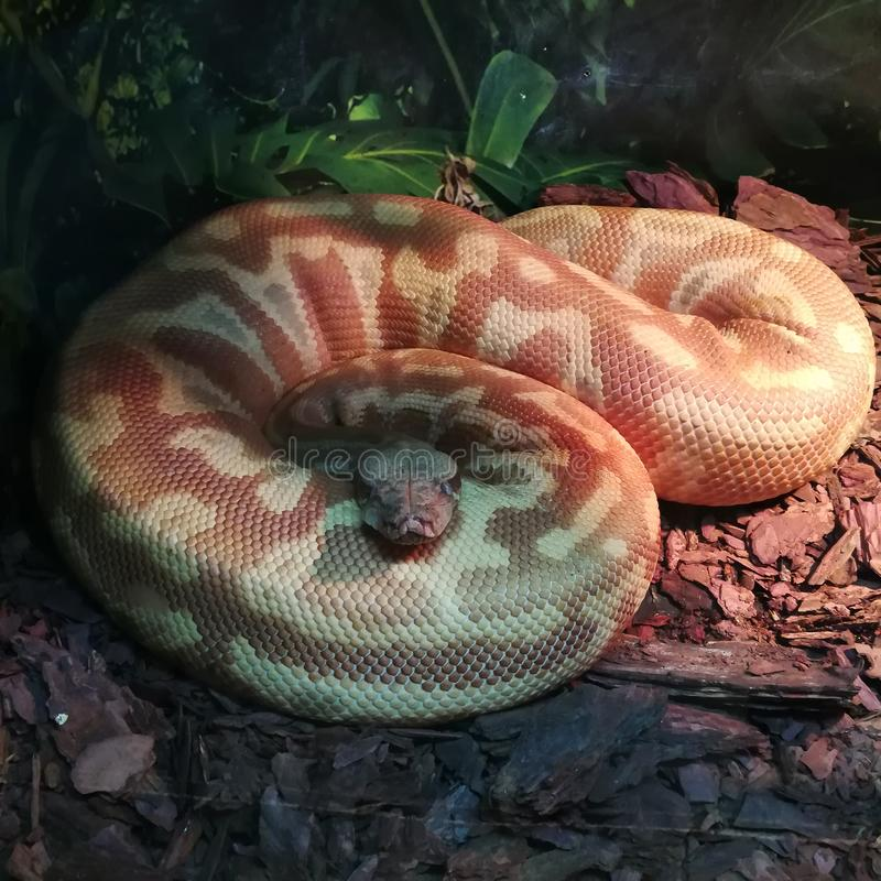 Grand serpent photos libres de droits
