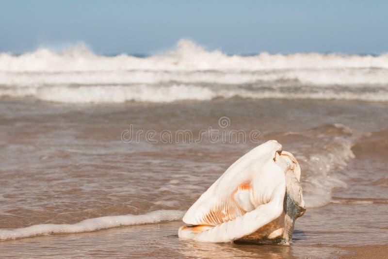 Grand Shell sur la plage photo libre de droits