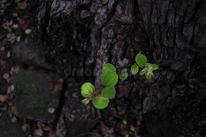 Grand soin d'arbre à survivre image stock