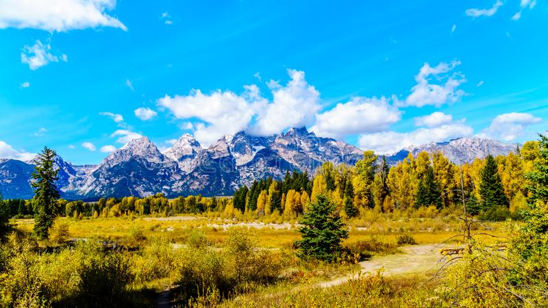 The Grand Tetons and Fall Colored Trees viewed from Schwabacher Landing in Grand Tetons National Park royalty free stock photo