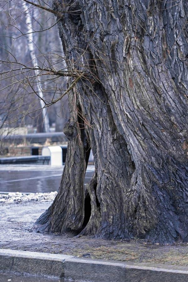 Download Grand tronc de vieil arbre image stock. Image du terrain - 56484101