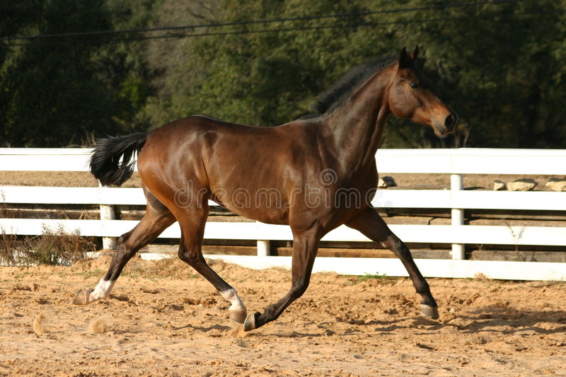 Grand trot photographie stock libre de droits