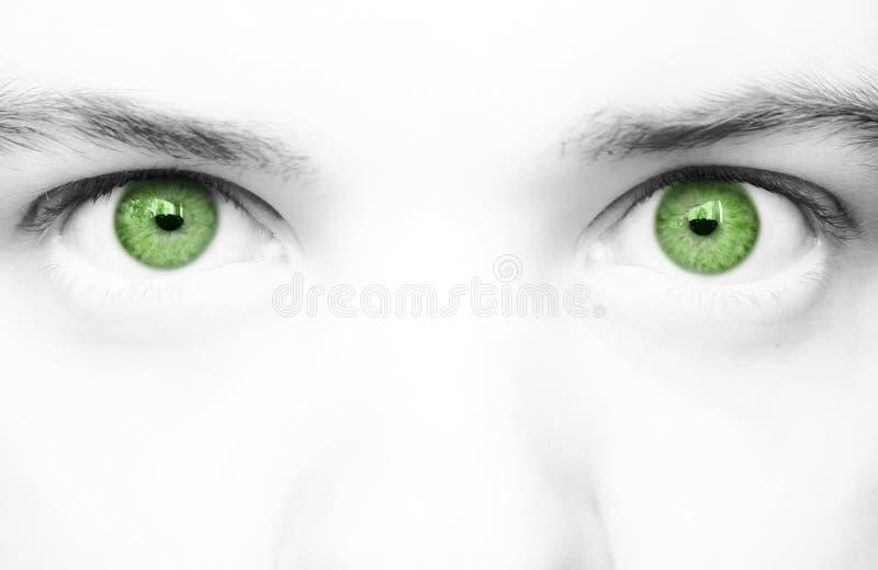 grand vert de yeux photo stock
