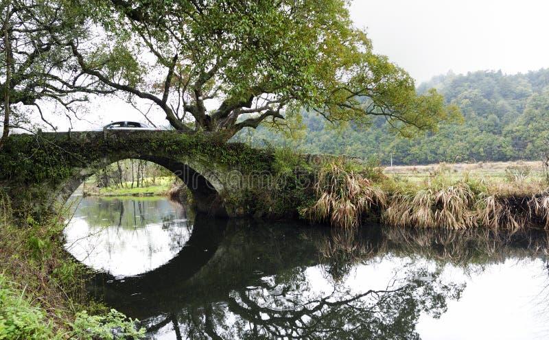 Grand vieil arbre de camphre au-dessus d'un petit birdge image libre de droits