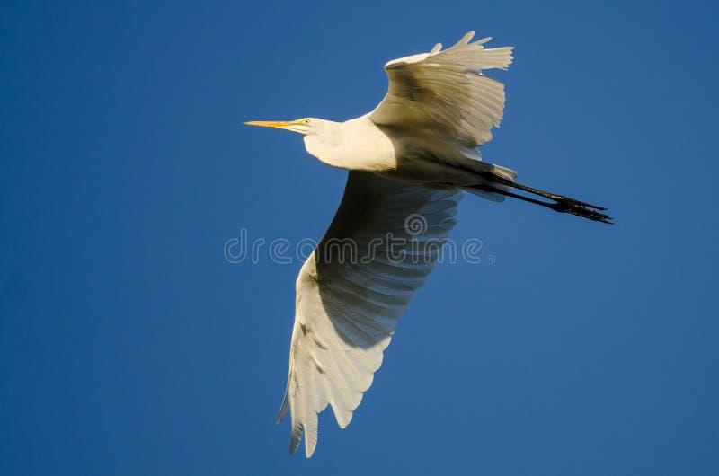 Grand vol de héron en ciel bleu image stock
