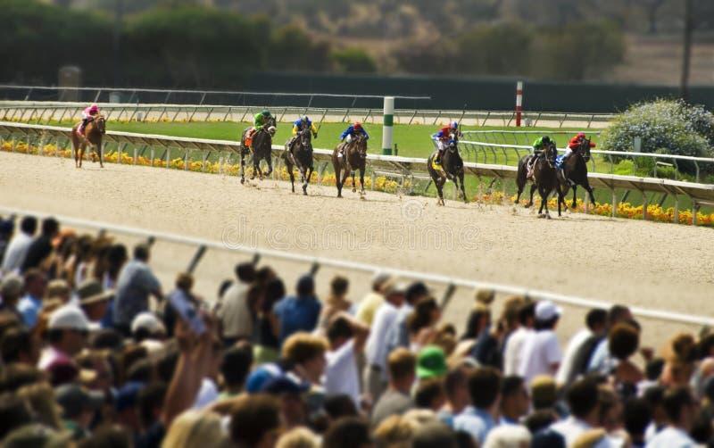 Grandangolare di corsa di cavalli fotografie stock libere da diritti