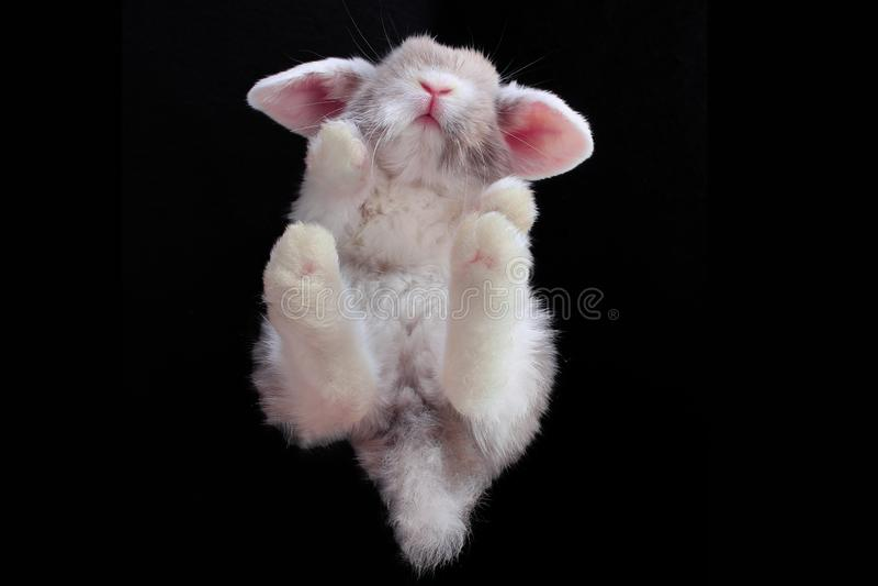 Grandangolare di sotto sperpective unico dell'animale domestico animale del coniglio fotografie stock libere da diritti