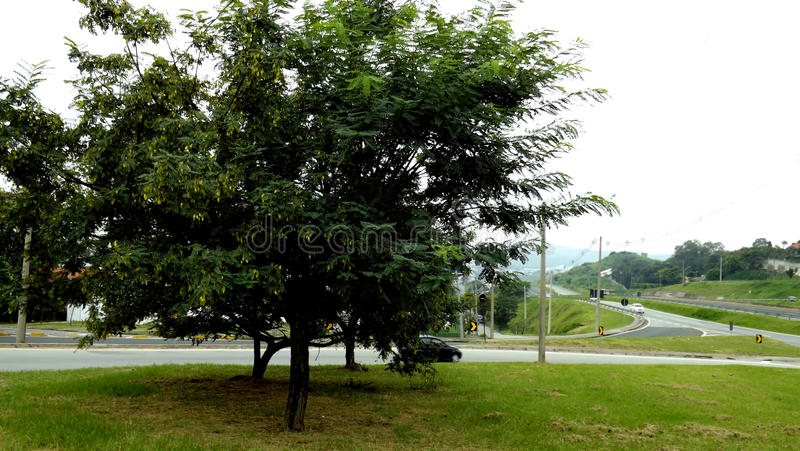 Grande árvore perto da estrada imagens de stock royalty free