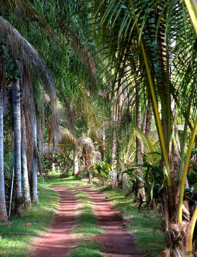 Grande île cachée une voie photo libre de droits