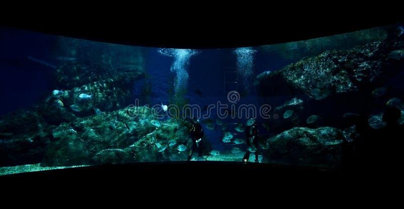Grande acquario immagini stock