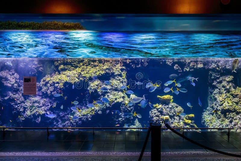 Grande acquario Custo fotografia stock